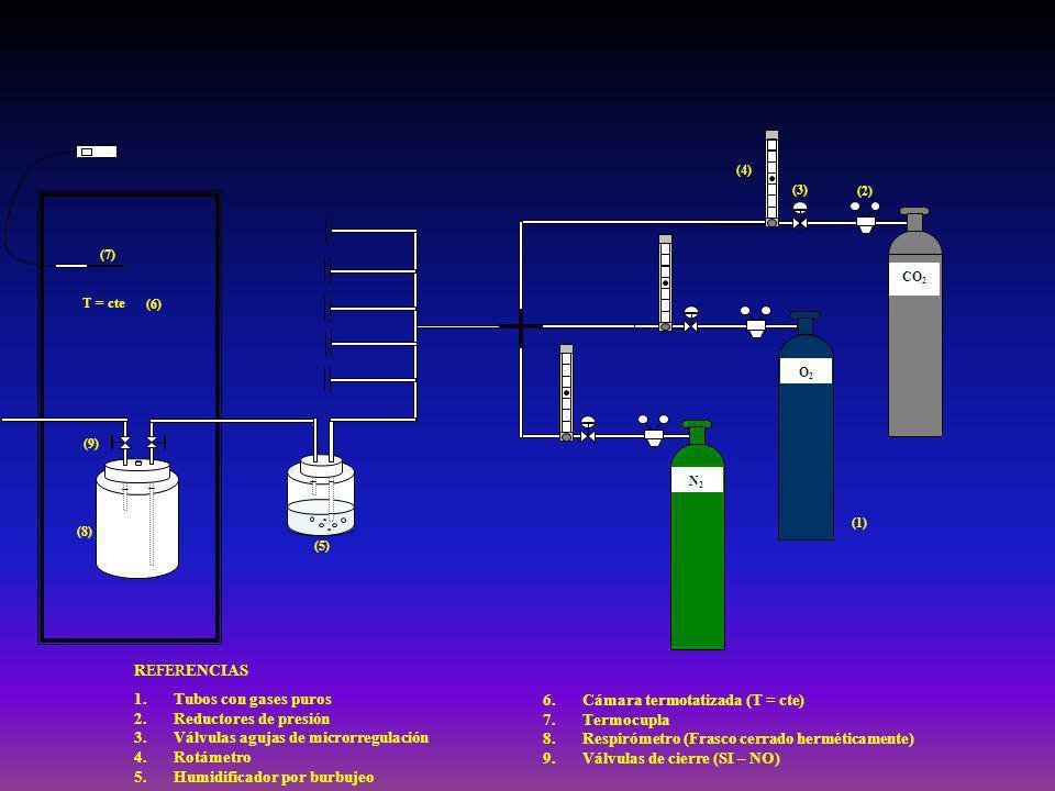 (4) (9) (8) (7) (6) (5) T = cte (3) (2) (1) CO 2 O2O2 N2N2 6.Cámara termotatizada (T = cte) 7.Termocupla 8.Respirómetro (Frasco cerrado herméticamente) 9.Válvulas de cierre (SI – NO) 1.Tubos con gases puros 2.Reductores de presión 3.Válvulas agujas de microrregulación 4.Rotámetro 5.Humidificador por burbujeo REFERENCIAS