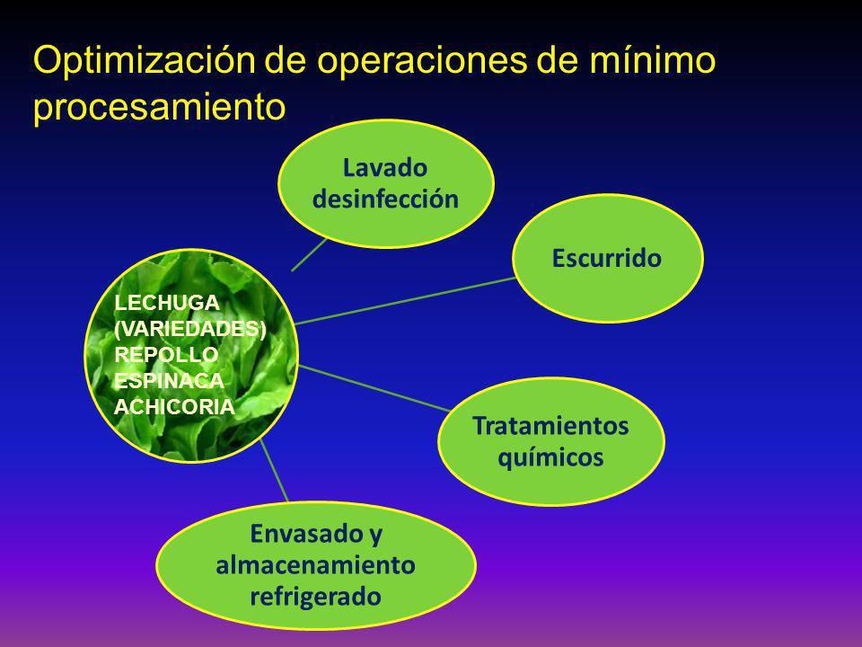 Lavado desinfección Escurrido Tratamiento s químicos Envasado y almacenamiento refrigerado LECHUGA (VARIEDADES) REPOLLO ESPINACA ACHICORIA Optimización de operaciones de mínimo procesamiento