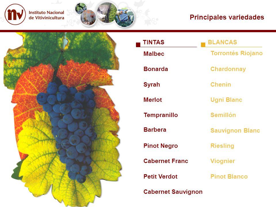TINTASBLANCAS Torrontés Riojano Chardonnay Chenin Ugni Blanc Semillón Sauvignon Blanc Riesling Viognier Pinot Blanco Malbec Bonarda Cabernet Sauvignon