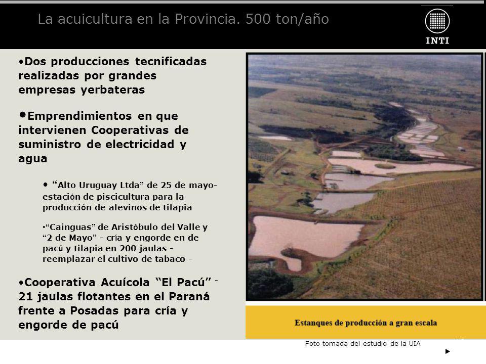 10 La acuicultura en la Provincia. 500 ton/año Dos producciones tecnificadas realizadas por grandes empresas yerbateras Emprendimientos en que intervi
