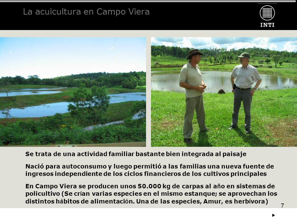 7 La acuicultura en Campo Viera Se trata de una actividad familiar bastante bien integrada al paisaje Nació para autoconsumo y luego permitió a las fa