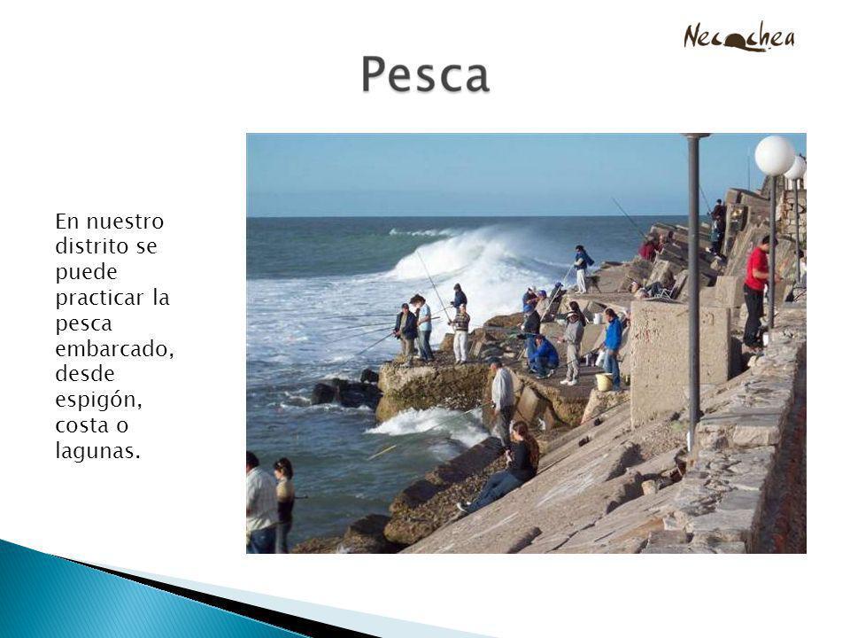 En nuestro distrito se puede practicar la pesca embarcado, desde espigón, costa o lagunas.