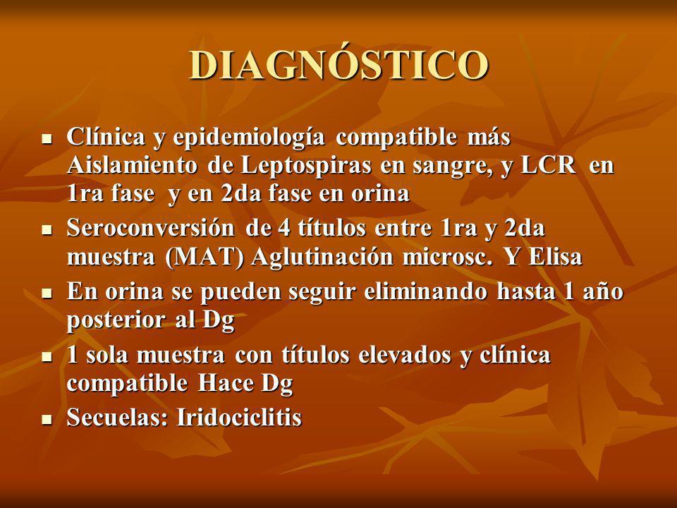 DIAGNÓSTICO Clínica y epidemiología compatible más Aislamiento de Leptospiras en sangre, y LCR en 1ra fase y en 2da fase en orina Clínica y epidemiología compatible más Aislamiento de Leptospiras en sangre, y LCR en 1ra fase y en 2da fase en orina Seroconversión de 4 títulos entre 1ra y 2da muestra (MAT) Aglutinación microsc.