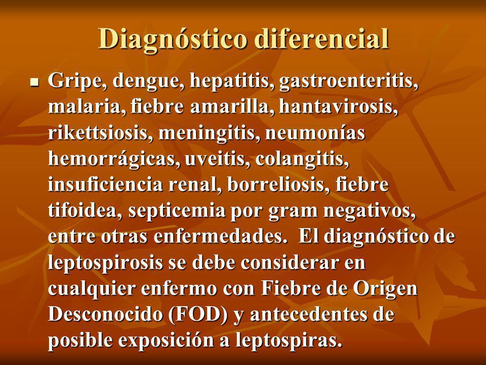 Diagnóstico diferencial Gripe, dengue, hepatitis, gastroenteritis, malaria, fiebre amarilla, hantavirosis, rikettsiosis, meningitis, neumonías hemorrágicas, uveitis, colangitis, insuficiencia renal, borreliosis, fiebre tifoidea, septicemia por gram negativos, entre otras enfermedades.