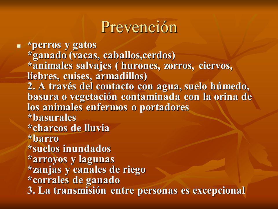 Prevención * perros y gatos *ganado (vacas, caballos,cerdos) *animales salvajes ( hurones, zorros, ciervos, liebres, cuises, armadillos) 2. A través d