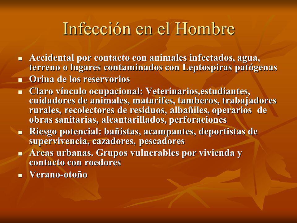Infección en el Hombre Accidental por contacto con animales infectados, agua, terreno o lugares contaminados con Leptospiras patógenas Accidental por