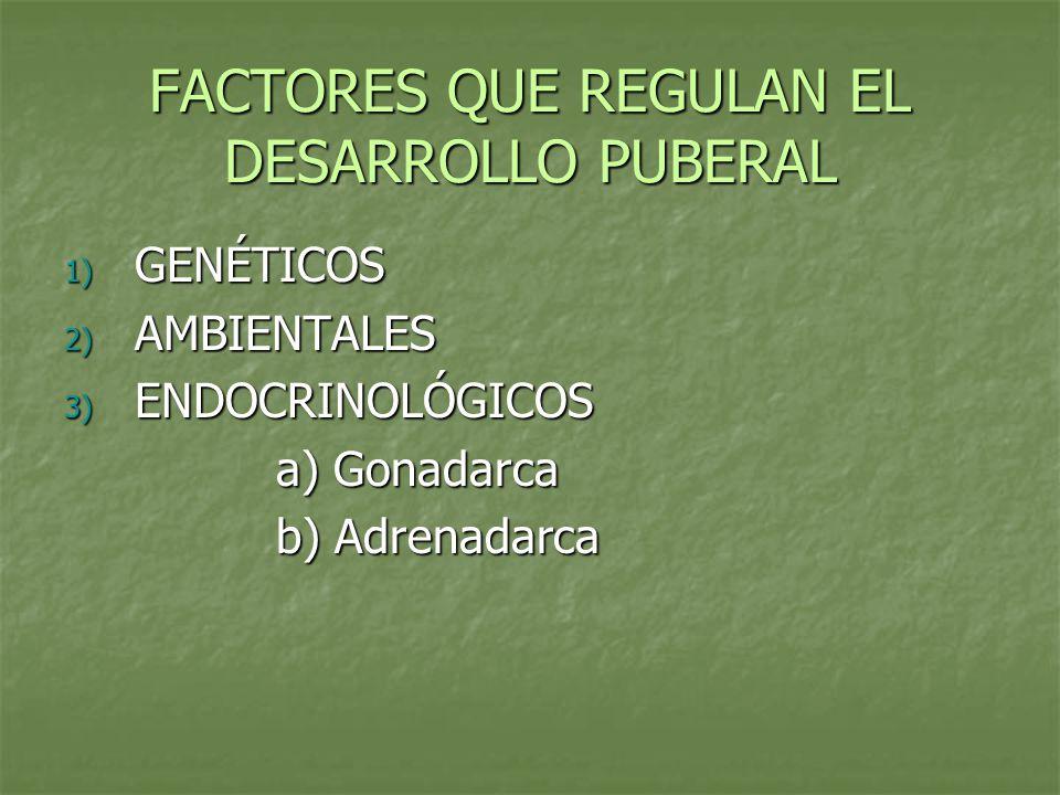 FACTORES QUE REGULAN EL DESARROLLO PUBERAL 1) GENÉTICOS 2) AMBIENTALES 3) ENDOCRINOLÓGICOS a) Gonadarca b) Adrenadarca