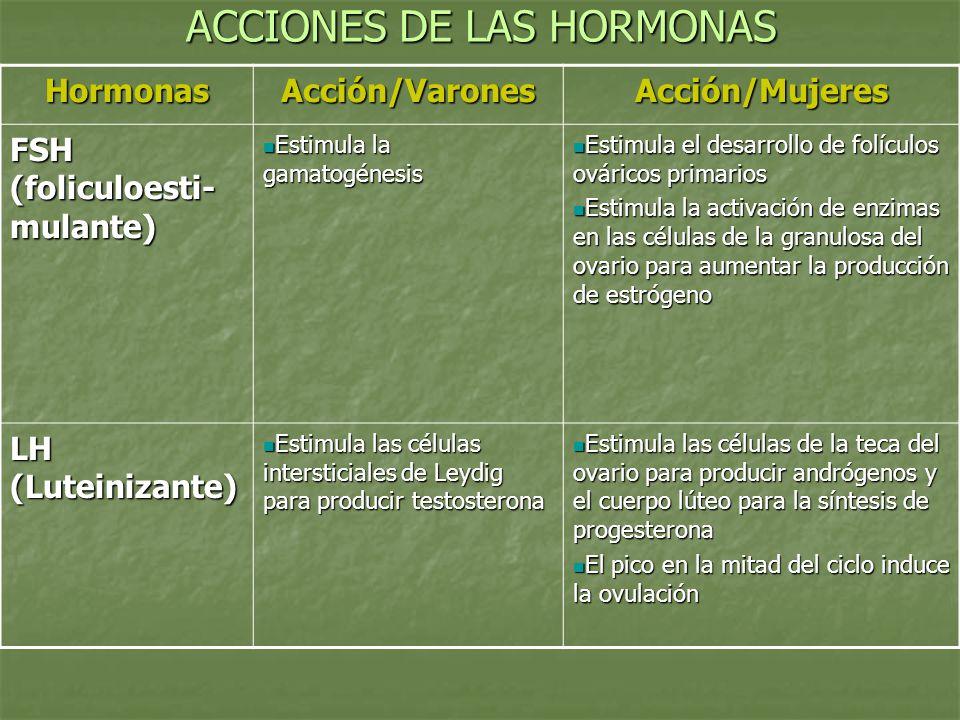 ACCIONES DE LAS HORMONAS HormonasAcción/VaronesAcción/Mujeres FSH (foliculoesti- mulante) Estimula la gamatogénesis Estimula la gamatogénesis Estimula