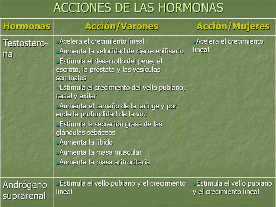 ACCIONES DE LAS HORMONAS HormonasAcción/VaronesAcción/Mujeres Testostero- na Acelera el crecimiento lineal Acelera el crecimiento lineal Aumenta la ve