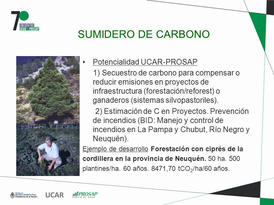 SUMIDERO DE CARBONO Potencialidad UCAR-PROSAP 1) Secuestro de carbono para compensar o reducir emisiones en proyectos de infraestructura (forestación/