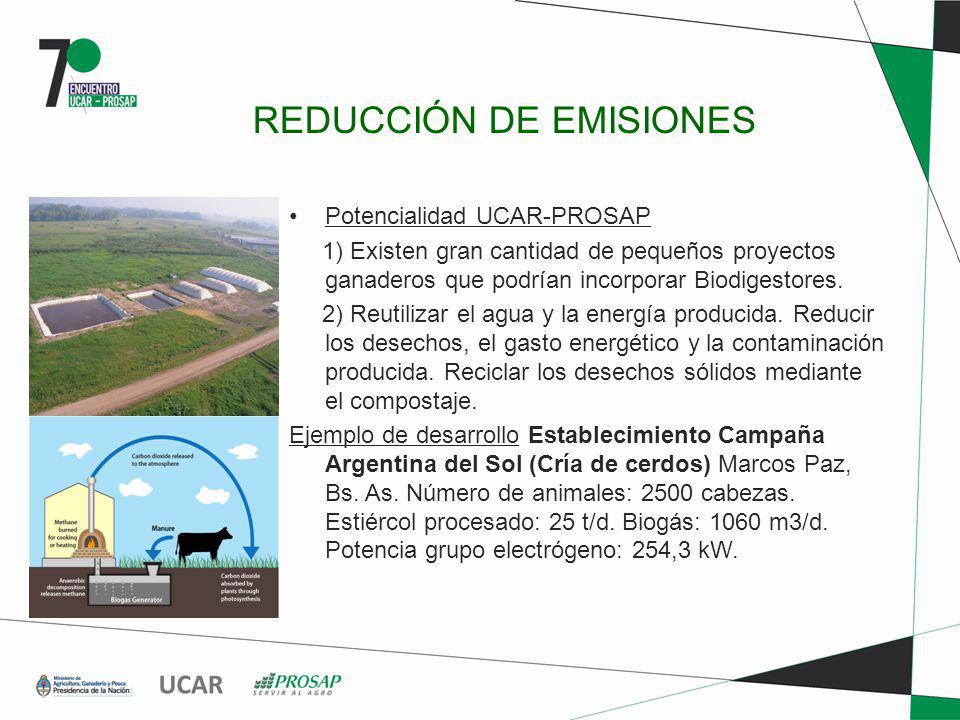 REDUCCIÓN DE EMISIONES Potencialidad UCAR-PROSAP 1) Existen gran cantidad de pequeños proyectos ganaderos que podrían incorporar Biodigestores. 2) Reu