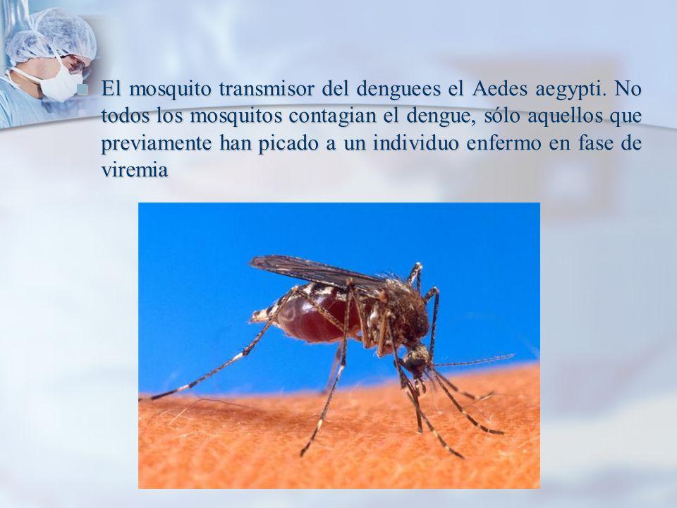 El mosquito transmisor del denguees el Aedes aegypti. No todos los mosquitos contagian el dengue, sólo aquellos que previamente han picado a un indivi