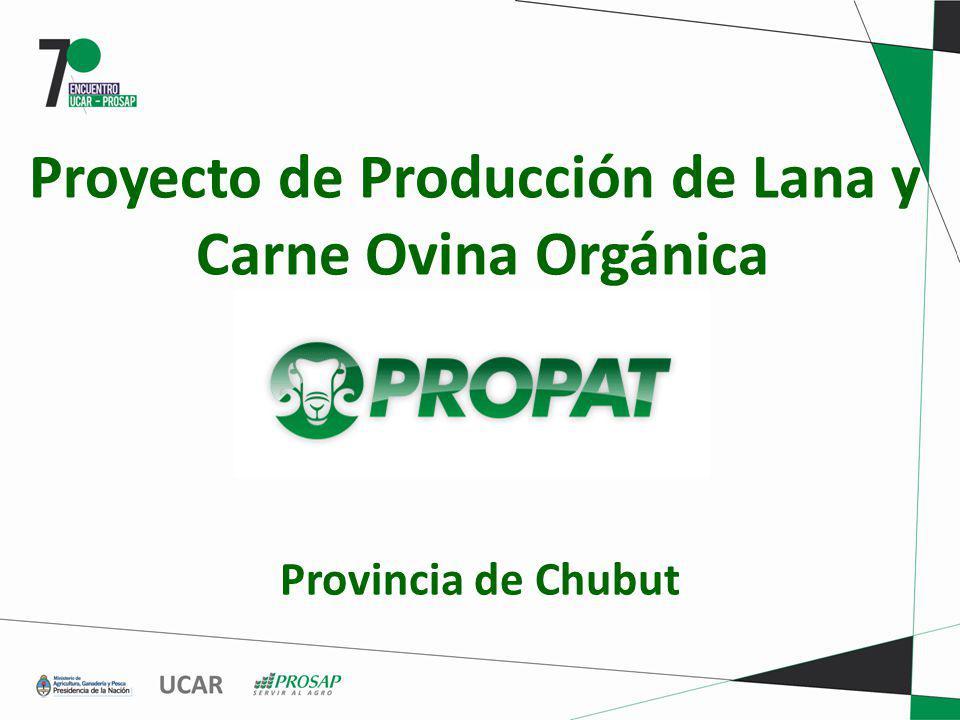 RESTRICCIONES DEL SISTEMA DE CARNE Y LANA OVINA PATAGÓNICA En el caso de la carne la cultura de la economía informal, el no cumplimiento de estándares sanitarios y fiscales.