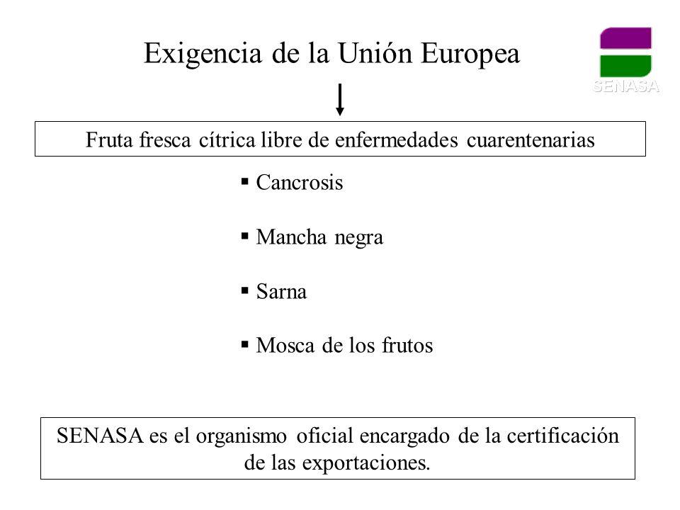 Exigencia de la Unión Europea Fruta fresca cítrica libre de enfermedades cuarentenarias Cancrosis Mancha negra Sarna Mosca de los frutos SENASA es el