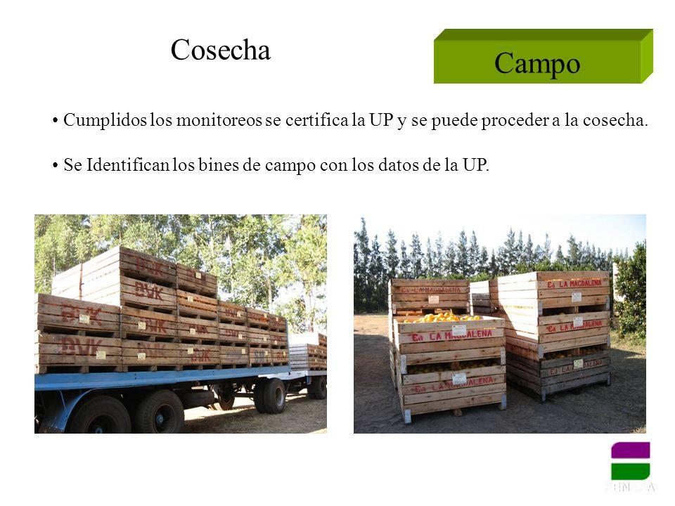 Campo Cosecha Cumplidos los monitoreos se certifica la UP y se puede proceder a la cosecha. Se Identifican los bines de campo con los datos de la UP.