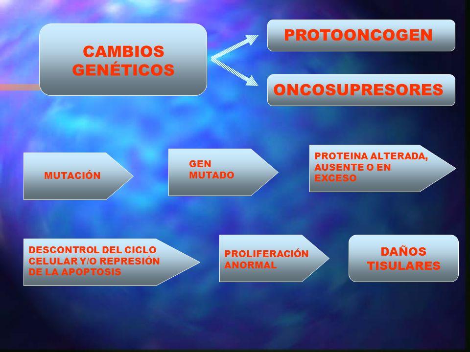 SUCEPTIBILIDAD HEREDITARIA HERENCIA EN EL CANCER CÉLULAS SOMÁTICAS CÉLULAS GERMINALES HEREDITARIO GEN DOMINANTE GEN RECESIVO ONCOGEN ONCO SUPRESOR