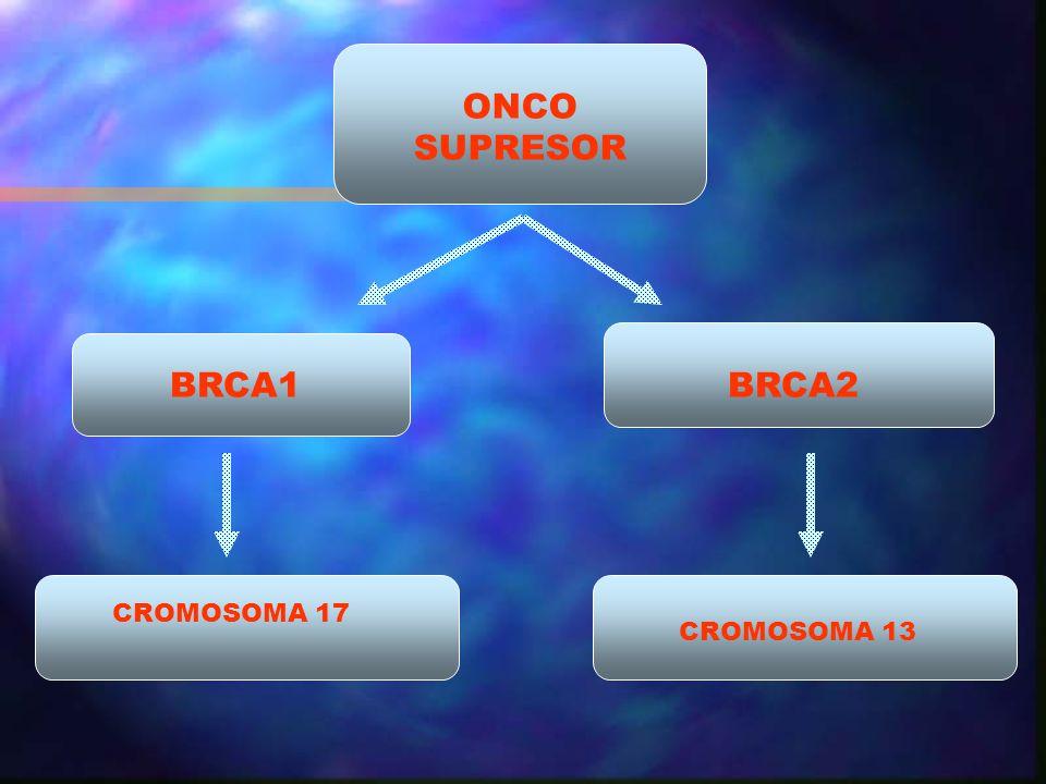 CROMOSOMA 17 ONCO SUPRESOR BRCA1BRCA2 CROMOSOMA 13