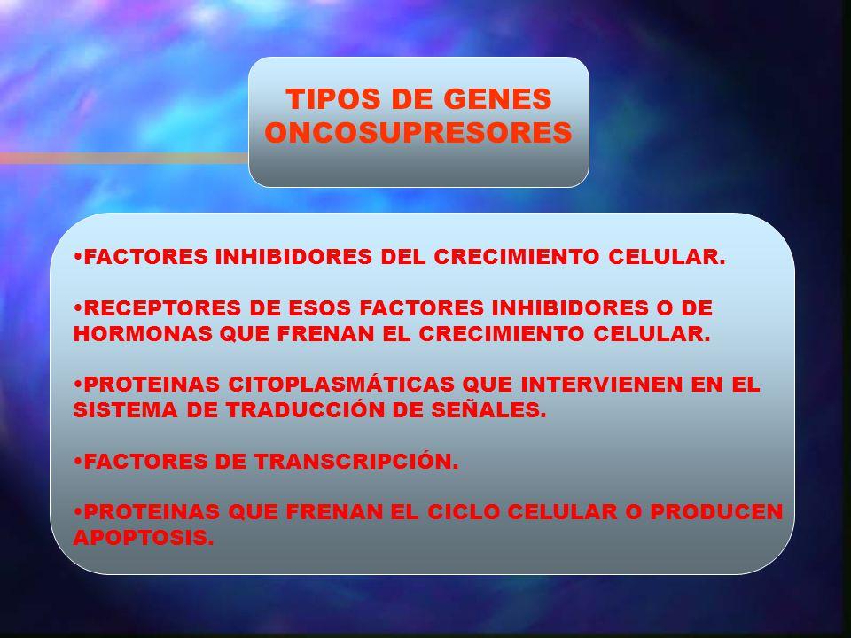 TIPOS DE GENES ONCOSUPRESORES FACTORES INHIBIDORES DEL CRECIMIENTO CELULAR. RECEPTORES DE ESOS FACTORES INHIBIDORES O DE HORMONAS QUE FRENAN EL CRECIM