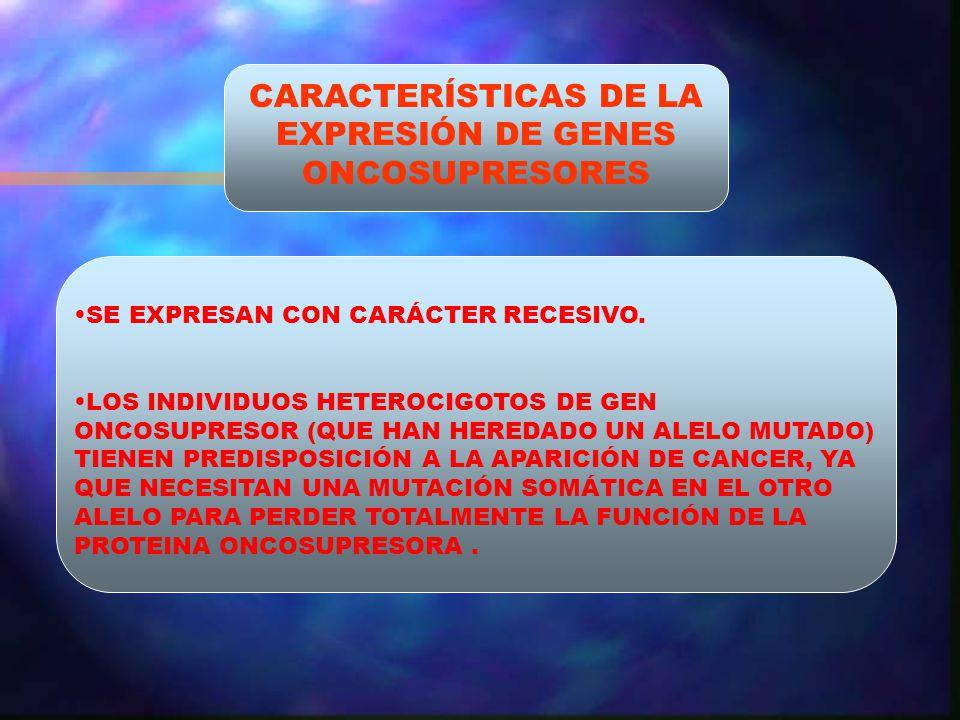 CARACTERÍSTICAS DE LA EXPRESIÓN DE GENES ONCOSUPRESORES SE EXPRESAN CON CARÁCTER RECESIVO. LOS INDIVIDUOS HETEROCIGOTOS DE GEN ONCOSUPRESOR (QUE HAN H