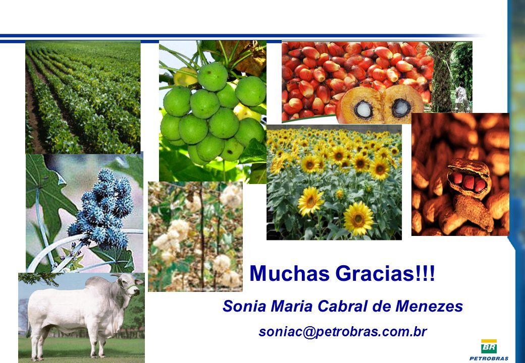 SUMMARY - TABLE Muchas Gracias!!! Sonia Maria Cabral de Menezes soniac@petrobras.com.br