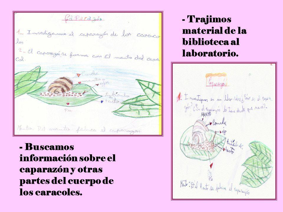 5 - Trajimos material de la biblioteca al laboratorio. - Buscamos información sobre el caparazón y otras partes del cuerpo de los caracoles.