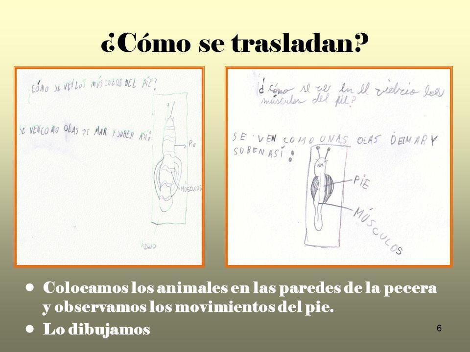7 ¿Pueden los caracoles desplazarse en distintas superficies y direcciones.