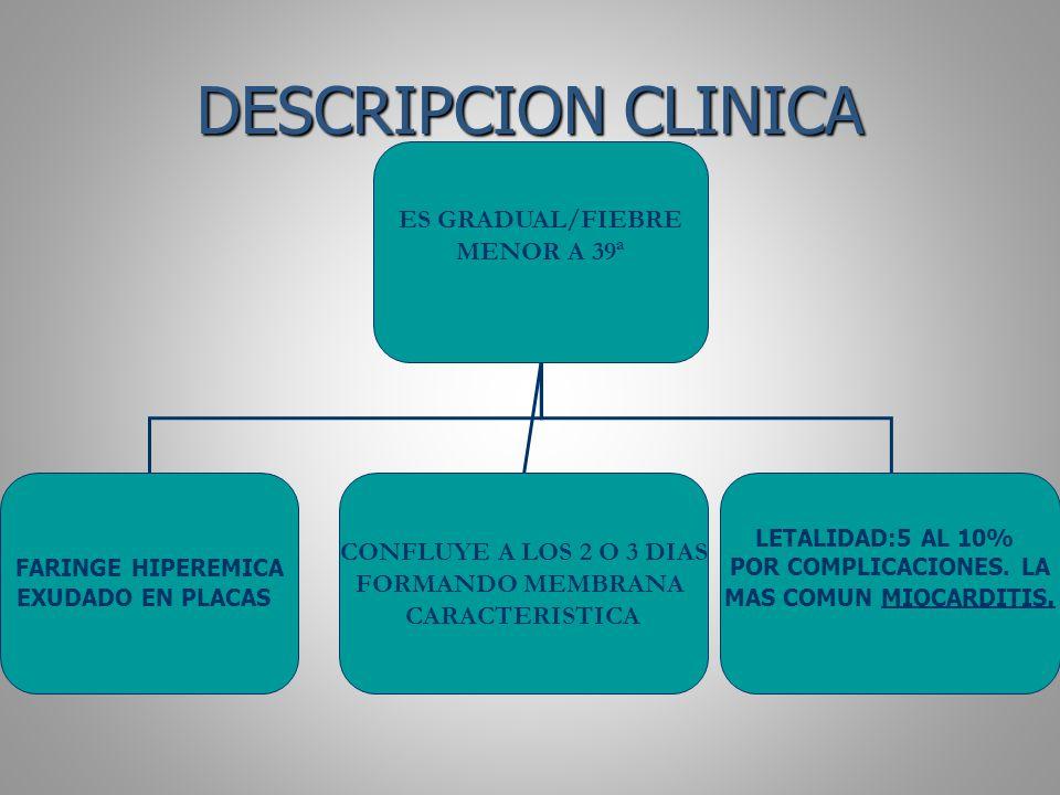 DESCRIPCION CLINICA ES GRADUAL/FIEBRE MENOR A 39ª CONFLUYE A LOS 2 O 3 DIAS FORMANDO MEMBRANA CARACTERISTICA LETALIDAD:5 AL 10% POR COMPLICACIONES. LA
