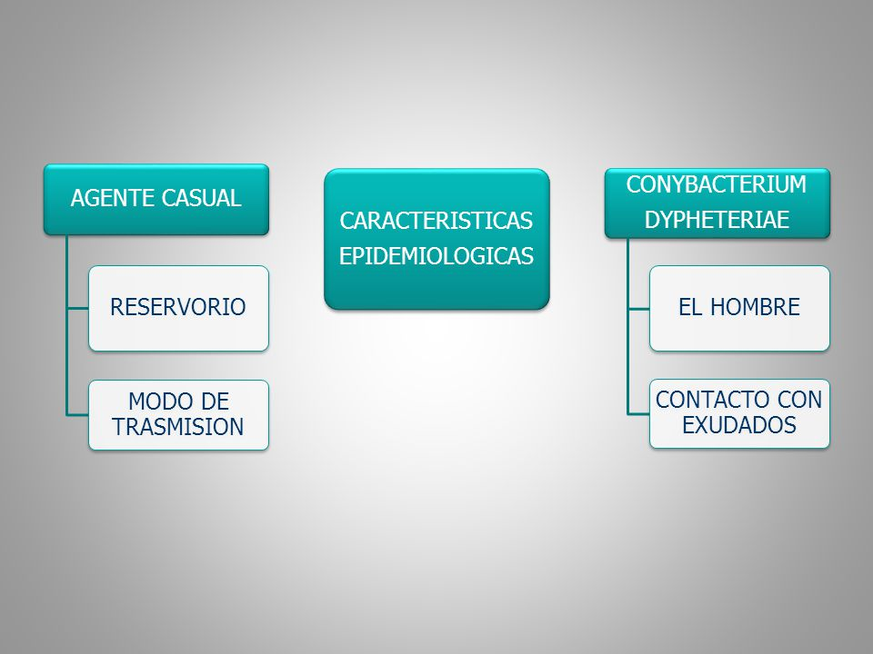 PERIODO DE INCUBACION PERIODO DE TRANSMISIBILIDAD SUCEPTIBILIDAD DE 2 A 5 DIAS ( 1 A 10) 2 SEMANAS SIN MEDICACION (CON MEDICACION MENOS A 4 DIAS) UNIVERSAL inmunidad Por la vacuna y por la enfermedad