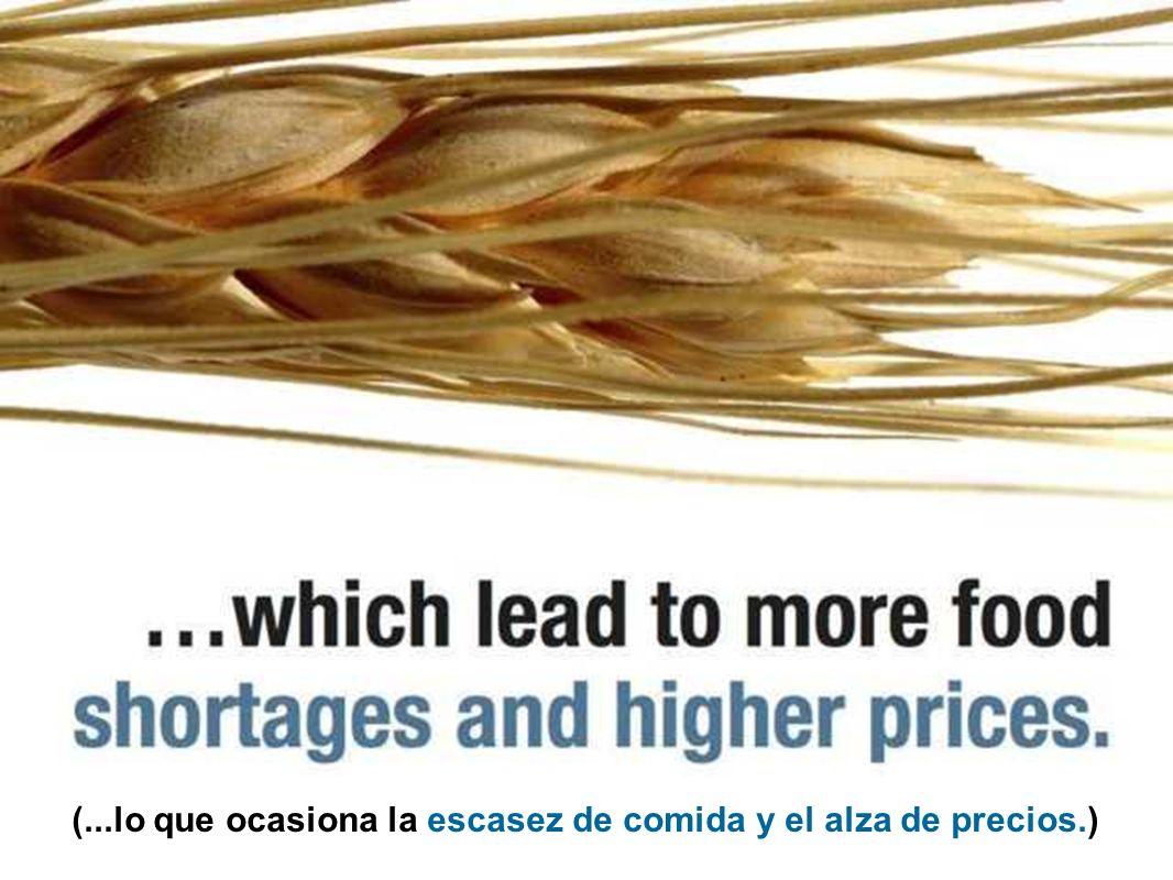 (Al agotarse las reservas de agua se reducen las cosechas de granos...)