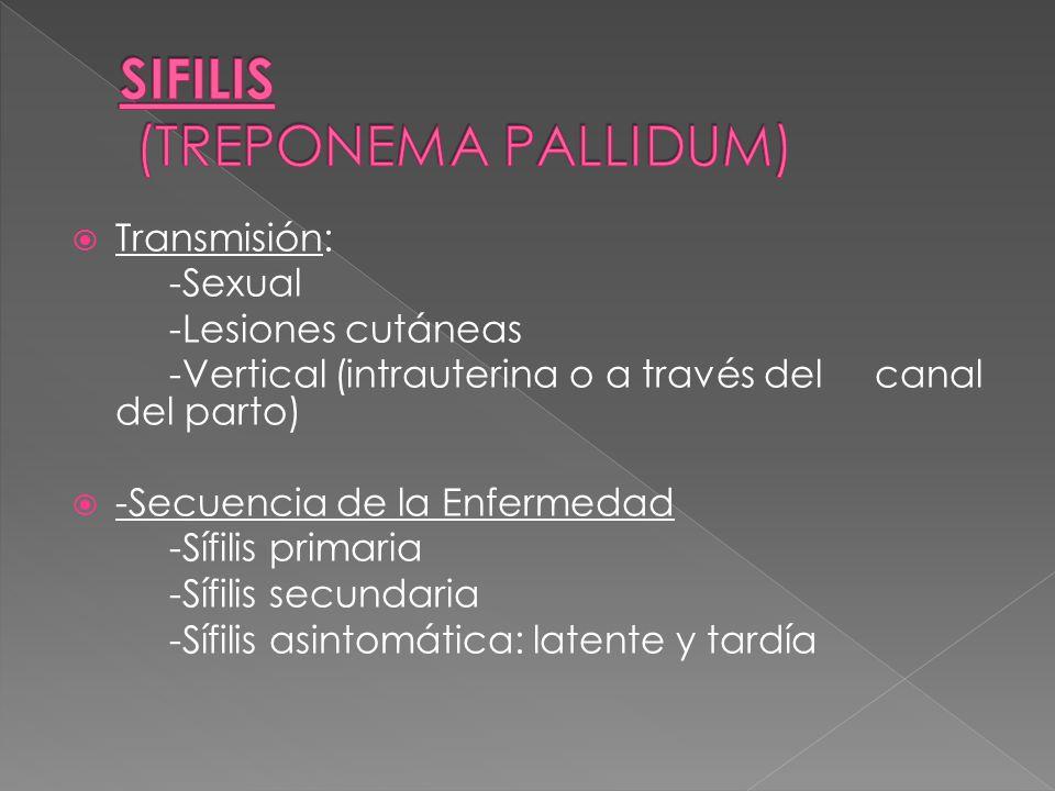 Transmisión: -Sexual -Lesiones cutáneas -Vertical (intrauterina o a través del canal del parto) -Secuencia de la Enfermedad -Sífilis primaria -Sífilis