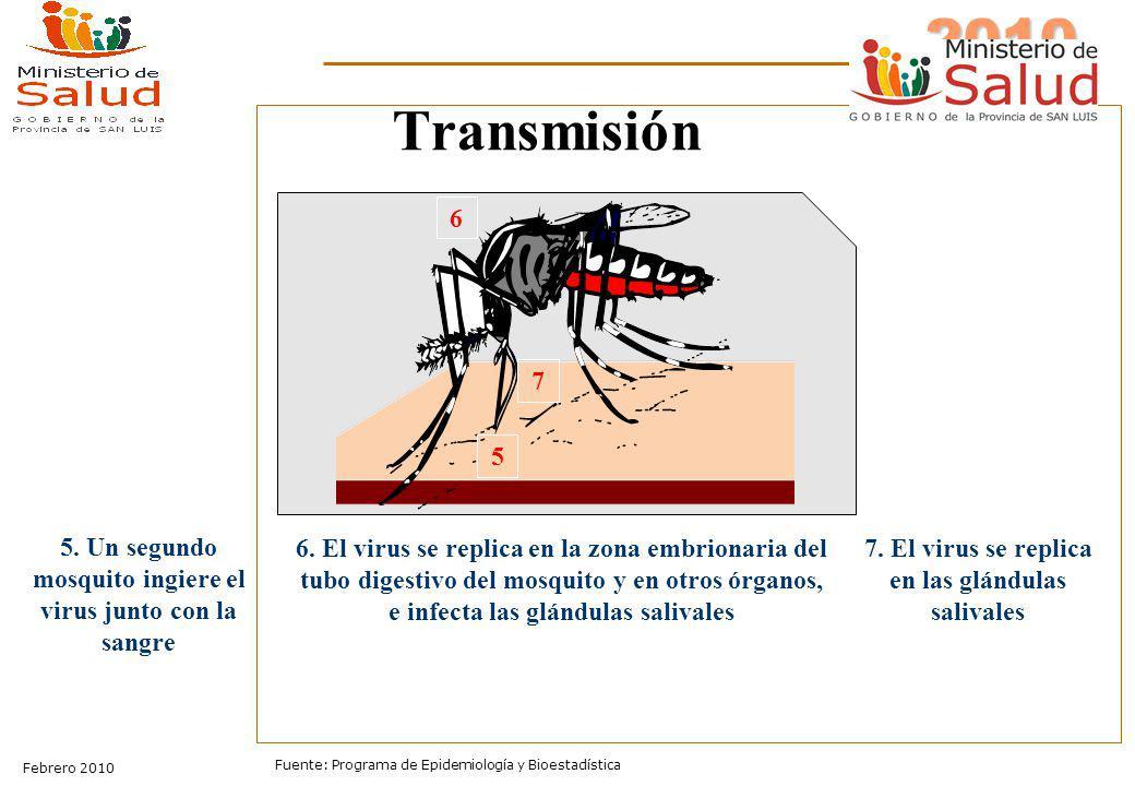 2010 Sala de Situación Febrero 2010 Fuente: Programa de Epidemiología y Bioestadística Transmisión 5. Un segundo mosquito ingiere el virus junto con l
