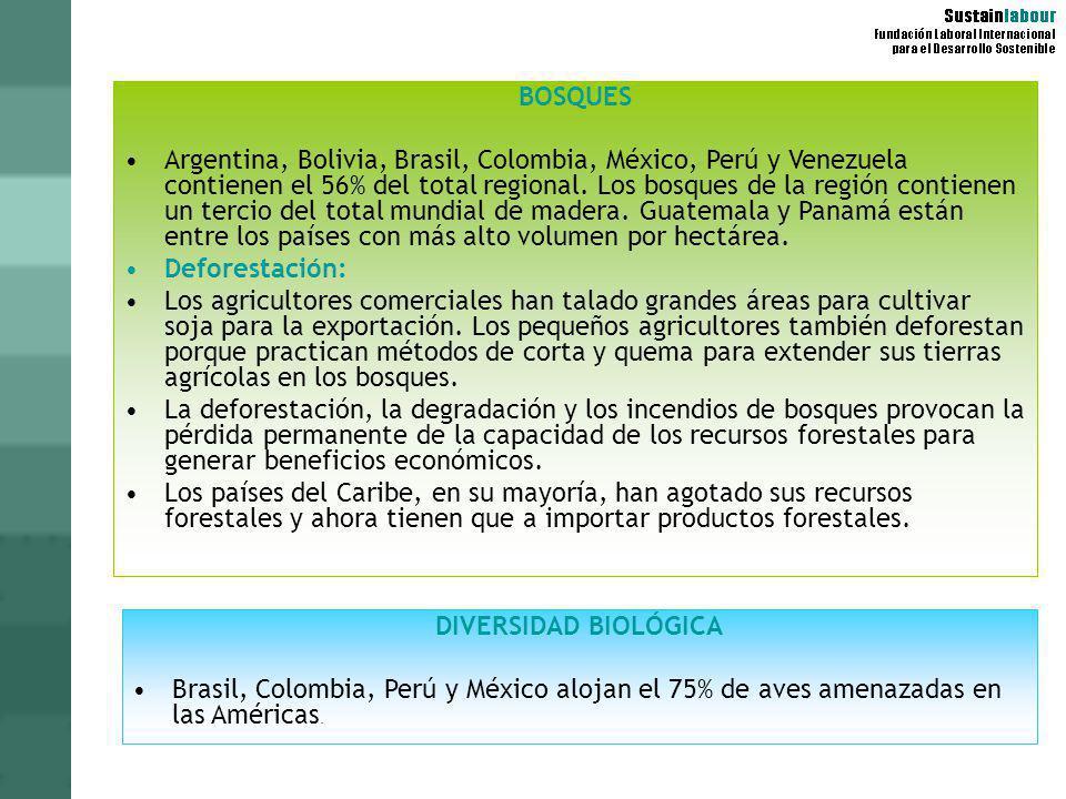 BOSQUES Argentina, Bolivia, Brasil, Colombia, México, Perú y Venezuela contienen el 56% del total regional. Los bosques de la región contienen un terc