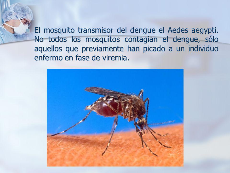 El mosquito transmisor del dengue el Aedes aegypti.
