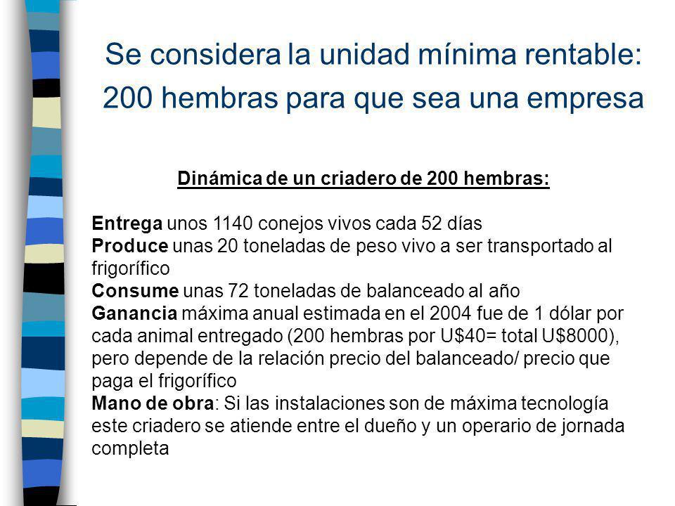 Se considera la unidad mínima rentable: 200 hembras para que sea una empresa Dinámica de un criadero de 200 hembras: Entrega unos 1140 conejos vivos c