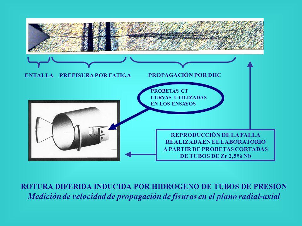 ROTURA DIFERIDA INDUCIDA POR HIDRÓGENO DE TUBOS DE PRESIÓN Medición de velocidad de propagación de fisuras en el plano radial-axial ENTALLA PREFISURA POR FATIGA PROPAGACIÓN POR DHC REPRODUCCIÓN DE LA FALLA REALIZADA EN EL LABORATORIO A PARTIR DE PROBETAS CORTADAS DE TUBOS DE Zr-2,5% Nb PROBETAS CT CURVAS UTILIZADAS EN LOS ENSAYOS