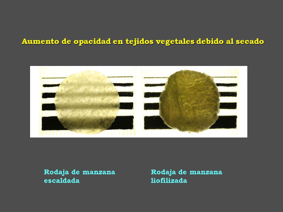 Rodaja de manzana liofilizada Rodaja de manzana escaldada Aumento de opacidad en tejidos vegetales debido al secado
