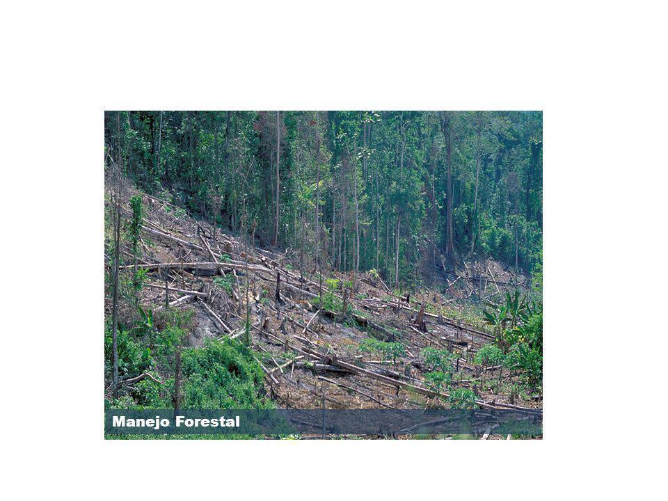 Manejo Forestal OP/BP 4.36 Forests