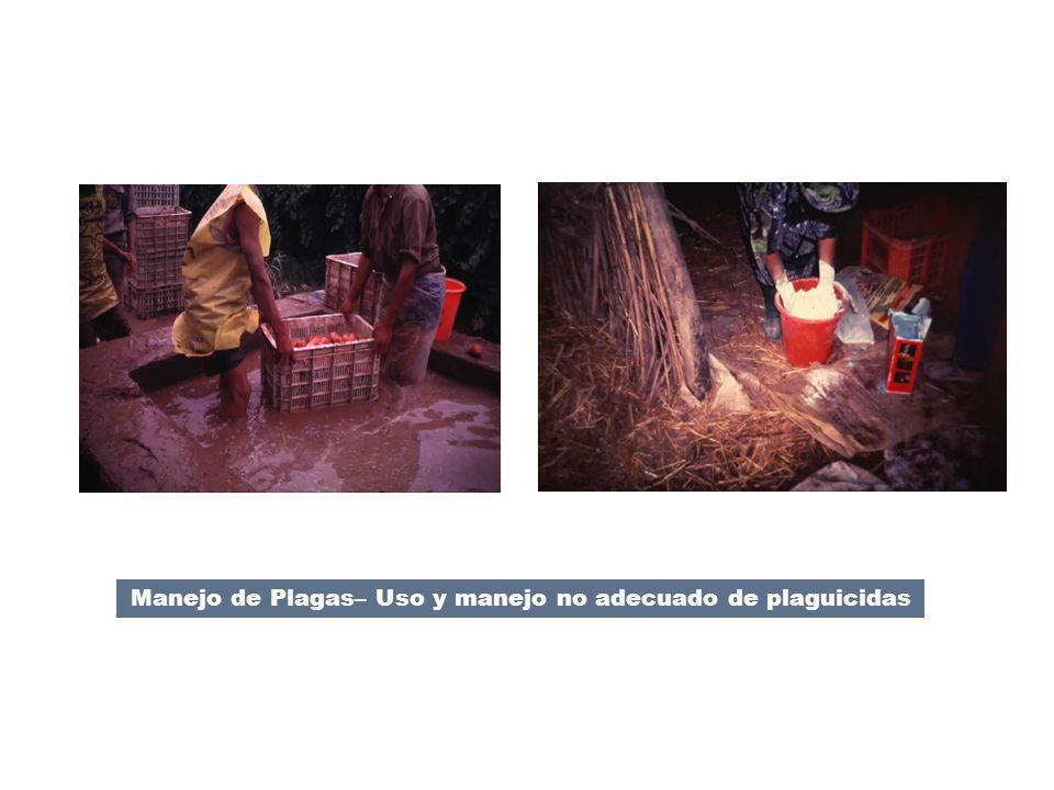 Manejo de Plagas– Uso y manejo no adecuado de plaguicidas OP 4.09 Pest Management