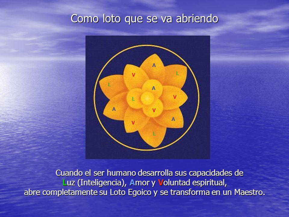 Como loto que se va abriendo Cuando el ser humano desarrolla sus capacidades de Cuando el ser humano desarrolla sus capacidades de Luz (Inteligencia),