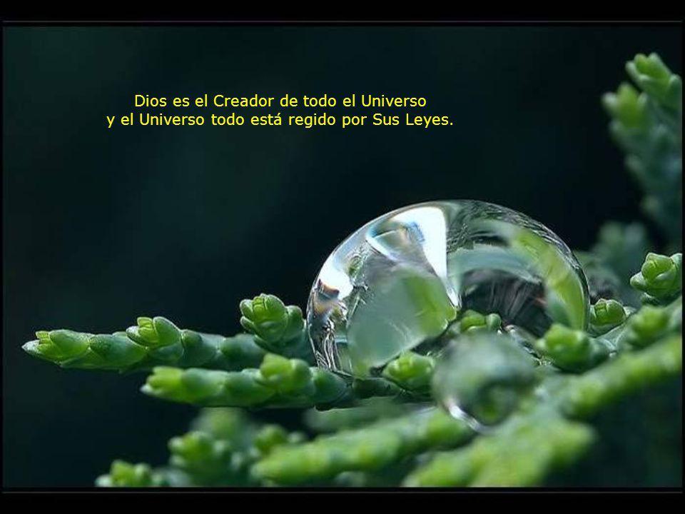 Dios es el Creador de todo el Universo y el Universo todo está regido por Sus Leyes.