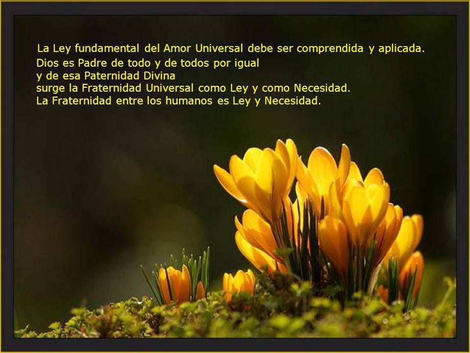 La Ley fundamental del Amor Universal debe ser comprendida y aplicada.
