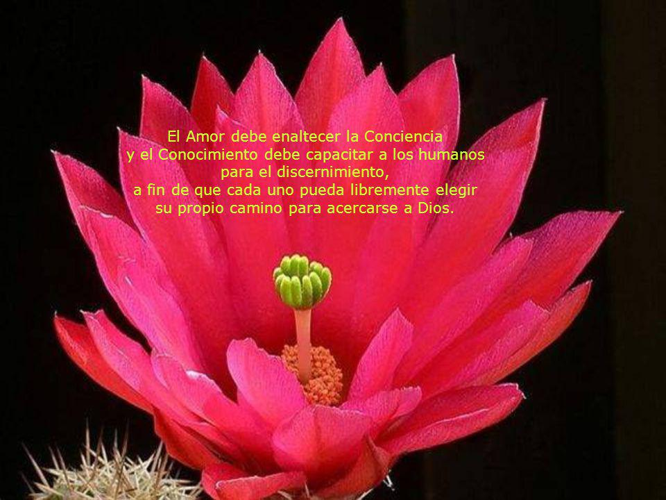 Sin Amor no hay Progreso y sin Progreso no hay Evolución. La Evolución es Ley y para Evolucionar es necesario seguir el Camino señalado por la Divinid