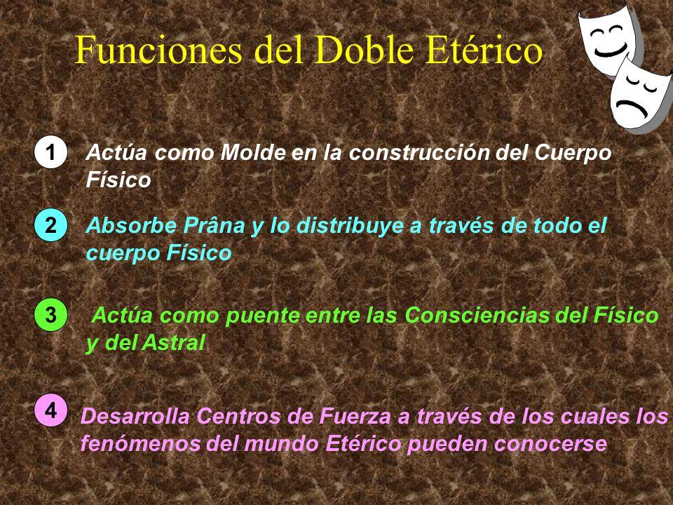 Funciones del Doble Etérico 1 Actúa como Molde en la construcción del Cuerpo Físico 2 Absorbe Prâna y lo distribuye a través de todo el cuerpo Físico 3 Actúa como puente entre las Consciencias del Físico y del Astral 4 Desarrolla Centros de Fuerza a través de los cuales los fenómenos del mundo Etérico pueden conocerse