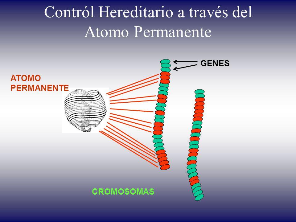 Contról Hereditario a través del Atomo Permanente ATOMO PERMANENTE CROMOSOMAS GENES