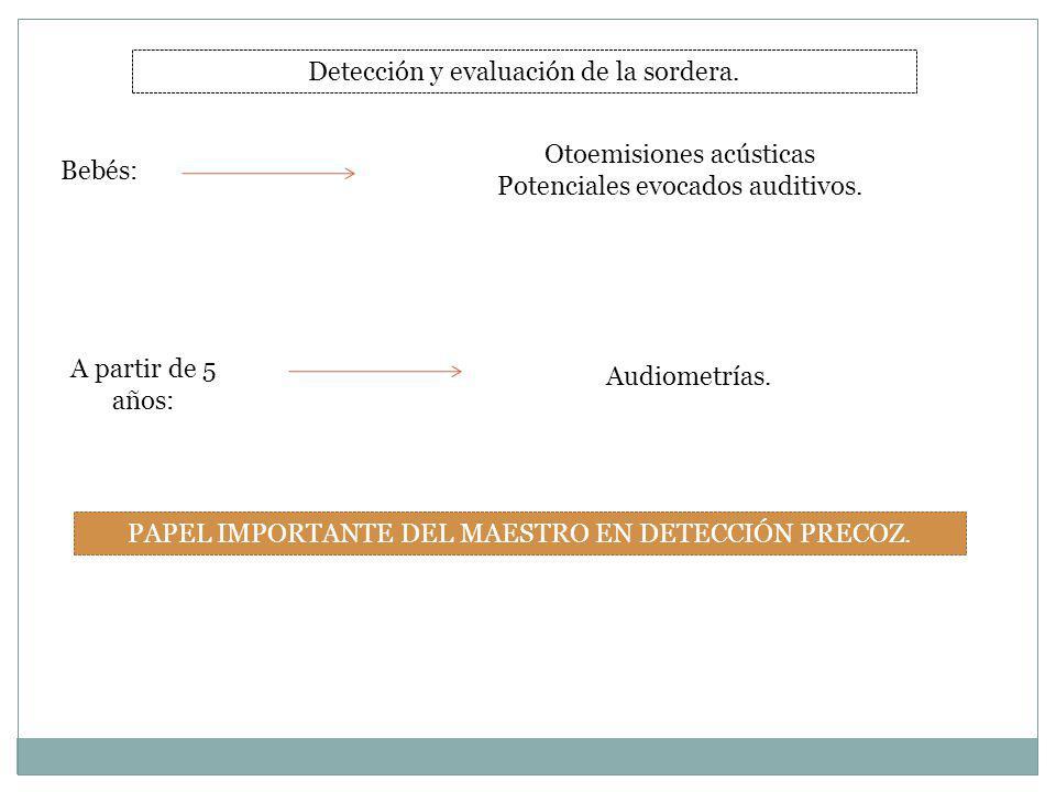 Detección y evaluación de la sordera. Bebés: Otoemisiones acústicas Potenciales evocados auditivos. A partir de 5 años: Audiometrías. PAPEL IMPORTANTE
