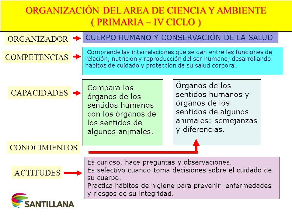 ORGANIZACIÓN DEL AREA DE CIENCIA Y AMBIENTE ( PRIMARIA – IV CICLO ) COMPETENCIAS CAPACIDADES ACTITUDES CONOCIMIENTOS Comprende las interrelaciones que