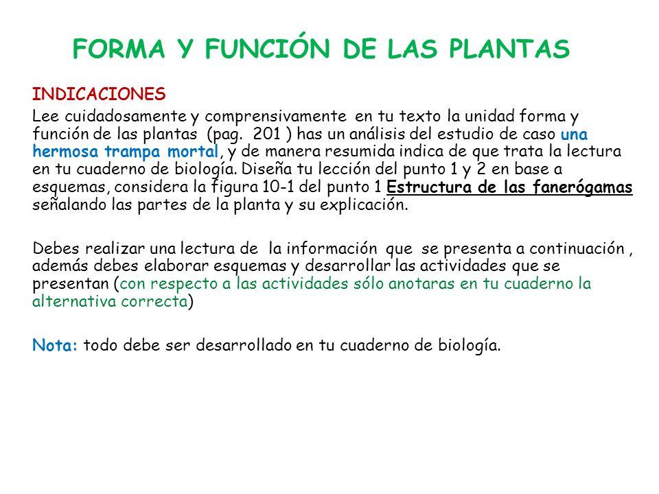 FORMA Y FUNCIÓN DE LAS PLANTAS INDICACIONES Lee cuidadosamente y comprensivamente en tu texto la unidad forma y función de las plantas (pag.