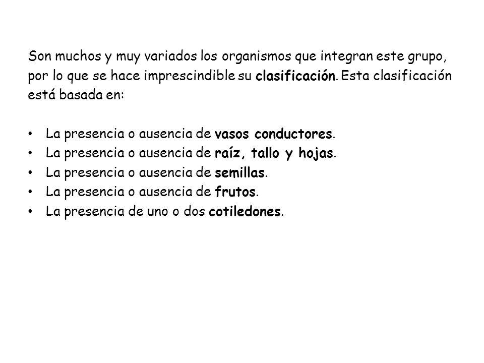 ACTIVIDAD 1 Has clic en la siguiente dirección: y desarrolla las actividades que se proponen http://recursos.cnice.mec.es/biosfera/alu mno/1bachillerato/reino_vegetal/activ1.