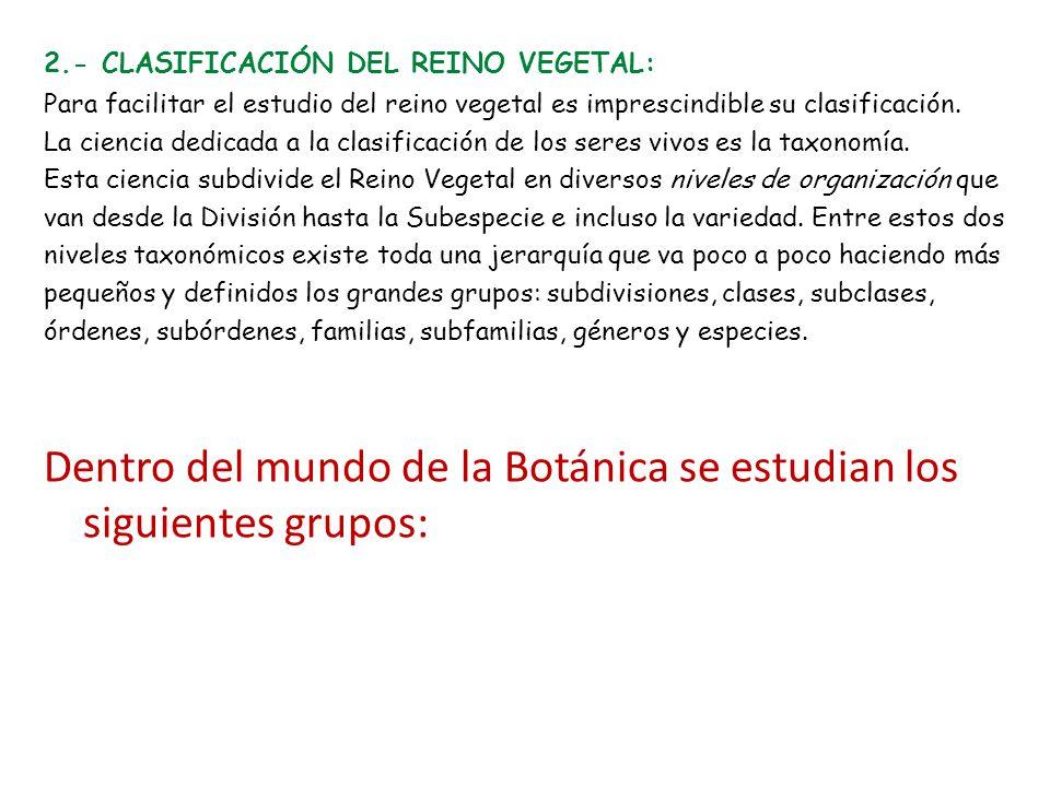 2.- CLASIFICACIÓN DEL REINO VEGETAL: Para facilitar el estudio del reino vegetal es imprescindible su clasificación.