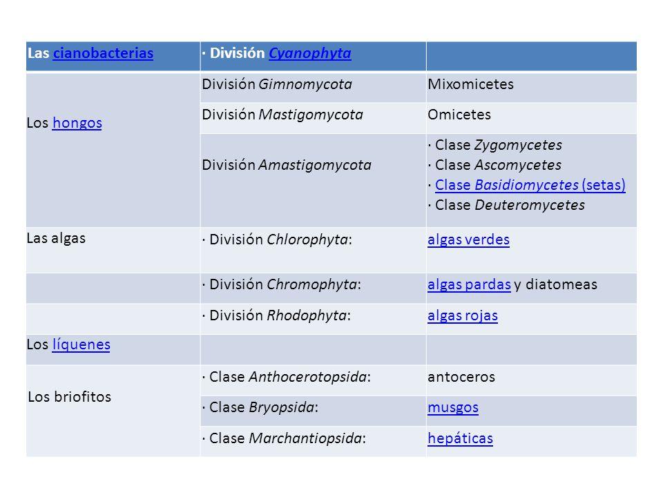 Las cianobacteriascianobacterias· División CyanophytaCyanophyta Los hongoshongos División GimnomycotaMixomicetes División MastigomycotaOmicetes División Amastigomycota · Clase Zygomycetes · Clase Ascomycetes · Clase Basidiomycetes (setas) · Clase DeuteromycetesClase Basidiomycetes (setas) Las algas · División Chlorophyta:algas verdes · División Chromophyta:algas pardasalgas pardas y diatomeas · División Rhodophyta:algas rojas Los líqueneslíquenes Los briofitos · Clase Anthocerotopsida:antoceros · Clase Bryopsida:musgos · Clase Marchantiopsida:hepáticas
